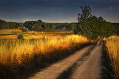 Country road between wheat fields 2 Royalty Free Stock Photography