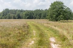 Country road landscape Royalty Free Stock Image