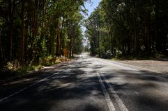 Country road winding trough an Australian Eucalyptus forest. royalty free stock image
