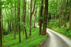 Country Road winds through Lush Forest Royalty Free Stock Image