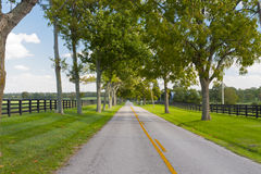 Country road on windy day Stock Images
