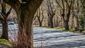 Country road in winter. Beautiful view of country road surrounded by leafless trees in winter Stock Photos