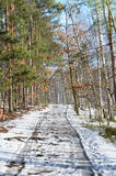 Country road in winter forest Royalty Free Stock Image
