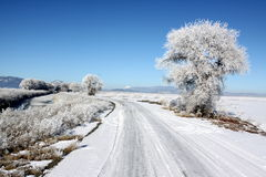 Country Road and Winter Frost Royalty Free Stock Photos