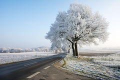 Country road in a winter landscape with frosted trees Royalty Free Stock Images