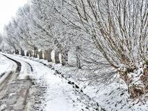 Country road in winter. Old country road with willow trees in winter cover Royalty Free Stock Images