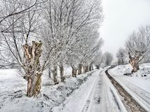 Country road in winter. Old country road with willow trees in winter cover Royalty Free Stock Image