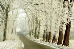 Country road in winter with snowy trees. Rural road between white trees in the middle of winter. Frost covers the branches of trees Stock Photo