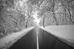 Country road in winter time royalty free stock images