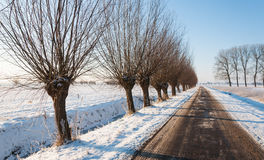 Country road in a wintry Netherlands Royalty Free Stock Image