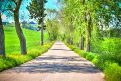 Country Road With Trees Along Royalty Free Stock Photo