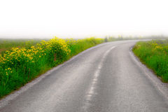 Country Road With Yellow Flowers Stock Photography