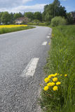 Country road wity dandelions Royalty Free Stock Photography