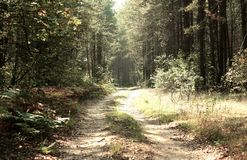 Country road in a wood Royalty Free Stock Photos