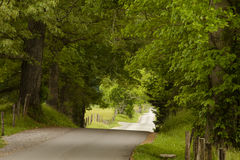 Country Road in the Woods stock photography