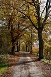 Country road woods autumn, Ardens, Wallonia, Belgium Stock Photos