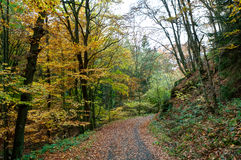 Country road woods autumn, Ardens, Wallonia, Belgium Stock Image