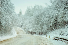 Country road woods with snow. Stock Images