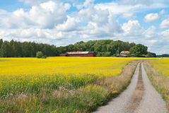 Country road in yellow meadow Royalty Free Stock Images