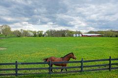 Country Roads. Photograph of a scene found along a country road with a horse along the fence, a beautiful green pasture, behind, and some out buildings in the Royalty Free Stock Photos