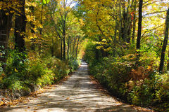 Country Roads. Beautiful country road with fall foliage royalty free stock photo