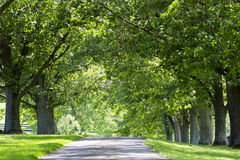 Country Rual Road. Oak lined rural lane in the afternoon sun Stock Photo