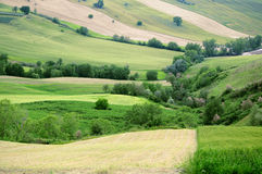 Country rural green fields Stock Photo