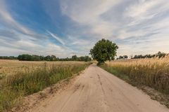Country rural sandy road near fields Royalty Free Stock Photography