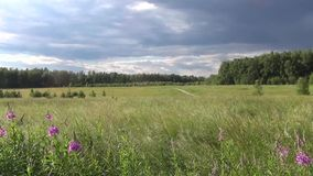 Country Russian summer landscape Royalty Free Stock Image