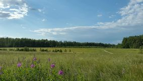 Country Russian summer landscape stock video footage