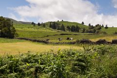 Country at Sao Miguel, Azores Islands. Country on the north of the island, with its fields, meadows and hills, together with trees and plants. White clouds on stock photos