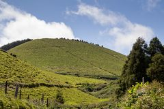 Country at Sao Miguel, Azores Islands. Country on the north of the island, with its fields, meadows and hills, together with trees and plants. White clouds on stock photography