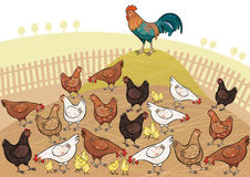 Country scene. Vector illustration of a fowls Stock Photography