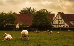 Country scene. Photograph stylized as an old oil painting Stock Photography