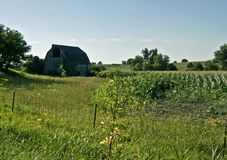 Country scene with a Barn. A midwestern landscape featuring a fence, cornfield, and a barn, against a blue sky Royalty Free Stock Photography