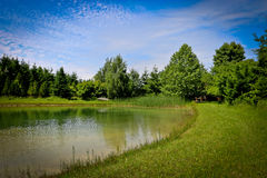 Country scene. A beautiful tree line and pond in the middle of the country on a sunny, summer day Stock Photography