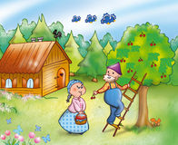 Country scene - digital illustration. Country people working. Grandma and grandpa are picking cherries together, digital illustration stock illustration