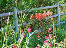 COUNTRY SCENE WITH FLOWERS NEXT TO WOODEN FENCE
