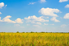 Country scene summer landscape Stock Photo
