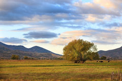 Country Scene at Sunset Stock Image
