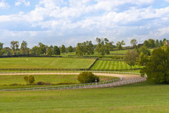 Country scenery with horse training track Stock Photos