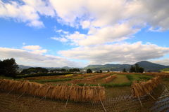 Country scenery. It is a country scenery of Japan Royalty Free Stock Image