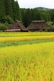 Country scenery. It is a country scenery of Japan Royalty Free Stock Photo