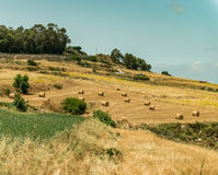 Country scenery of Mdina Stock Images