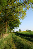 Country side. A path along the edge of a wood between and corn fields royalty free stock photos