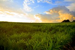 Free Country Side Royalty Free Stock Photos - 5897528