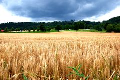 Country side. Photo of a Country side in UK talken in 2004 Royalty Free Stock Images