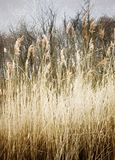 Country Side Beauty. Wheat summer farm beauty Royalty Free Stock Photo