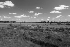 Country Side. Picture of an open field with forest on horizon - grayscale - light clouds in the sky Stock Photography