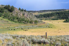 Country side view and farm land with cows at Colorado USA Royalty Free Stock Photos